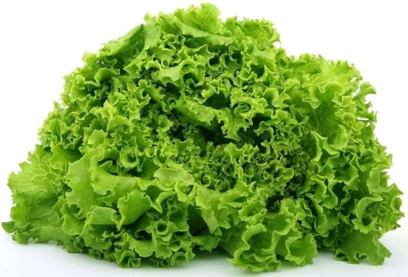молодой салат