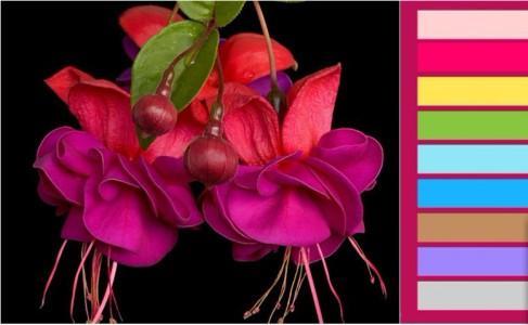 Сочетание фуксии с другими цветами